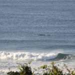 whale sighting from ocean grove guesthouse